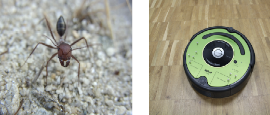 Cataglyphis ant navigation strategies solve the global localization problem in robots with binary sensors