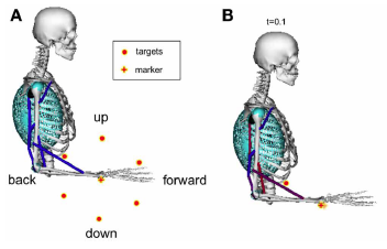 Learned parametrized dynamic movement primitives with shared synergies for controlling robotic and musculoskeletal systems