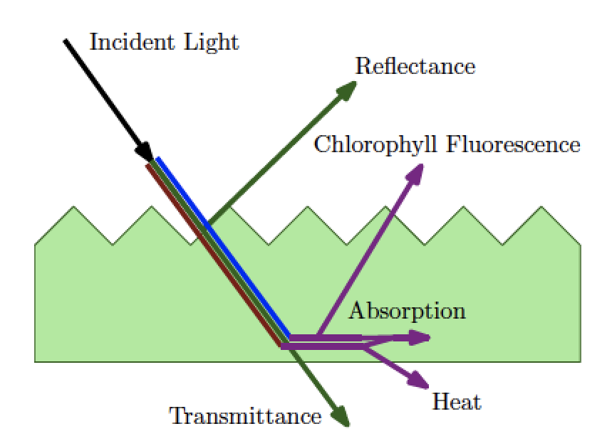 Exploiting Chlorophyll Fluorescense for Building Robust low-Cost Mowing Area Detectors